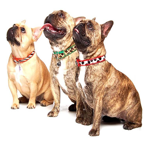 The Safari Collection Dog Collars - Holly & Lil Collars Handmade in Britain, Leather dog collars, leads & Dog harnesses.